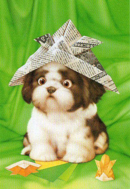 """Muramatsu Dog 44"" by kyoto348 | Dogs by Makoto Muramatsu | September 16, 2012:"