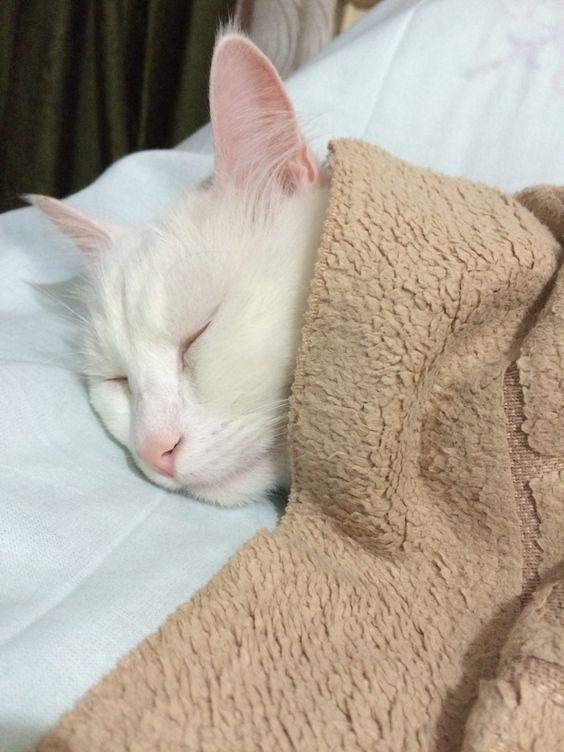 World Sleep Day 7 Cute Sleepy Cats Who Just Can T Stay Awake Videos Cattime Kittens Sleepy Cat Cats