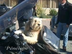 Partir en balade à moto avec son chien