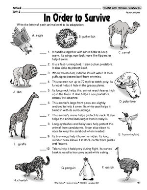 Printables Animal Adaptations Worksheets results for animal adaptations worksheet guest the mailbox mailbox