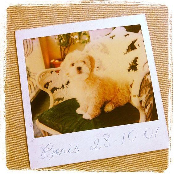 Boris :) #dog  #dogs #cão #cachorro