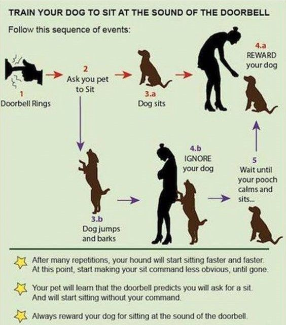 Dog Training 101 How To Train Your Dog Training Your Dog Dogs