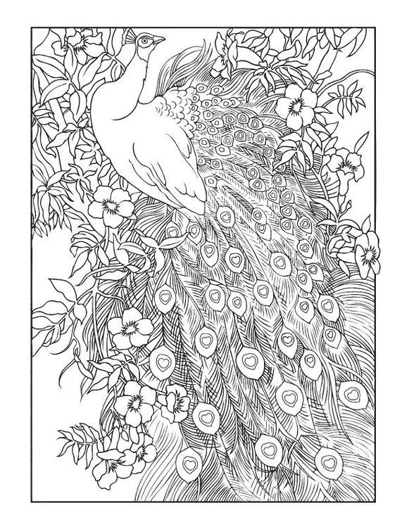 Omeletozeu Peacock Coloring Pages Mandala Coloring Pages Designs Coloring Books