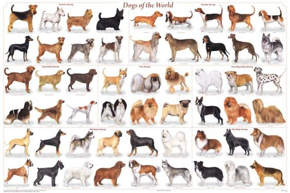 Laminated Dogs of the World Poster 24x36 Canis lupus
