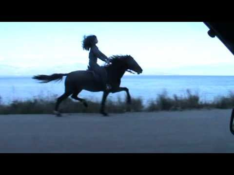 INSTANBUL KATERINA - BERLEMIS HORSES - YouTube