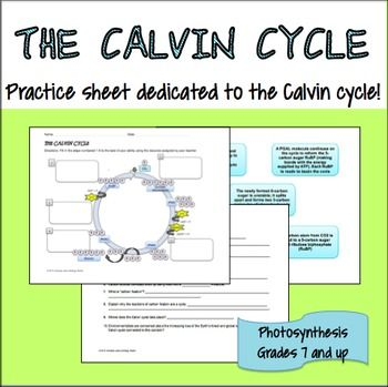 Photosynthesis- Calvin Cycle | Photosynthesis and Learning
