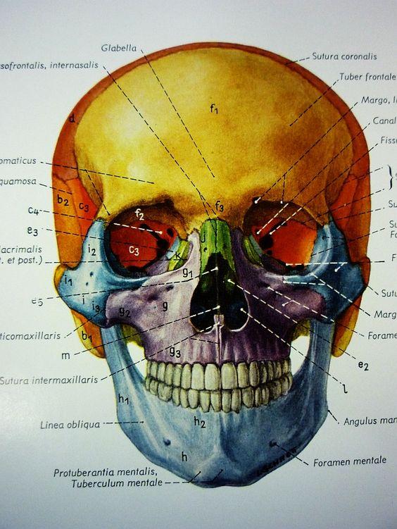 human neck - Google Search | human neck | Pinterest