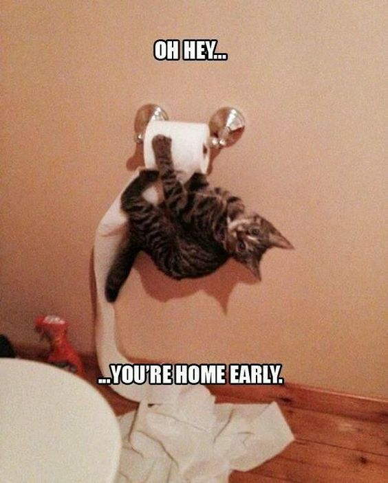 Oh Hey You're Home Early cute memes animals cat cats adorable animal kittens pets kitten funny pictures funny animals funny cats: