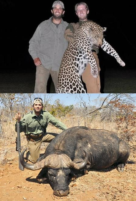 "Donald Trump Jr. and Eric Trump, brothers on a thrill-kill mission to shoot innocent and endangered animals. Please speak out against abuse and cruelty in ALL its forms. Boycott the Trumps in any way you can. DO NOT watch their television show, ""celebrity apprentice"". Please boycott the Trumps. This cannot be tolerated. They kill ""Animals"" for their thrills and kicks.  Do YOU think he ate these?"