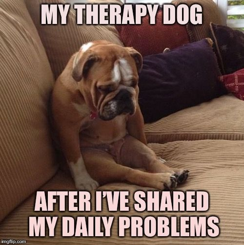 20 Cute Funny And Adorable Animals For Getting You Out Of The Weekly Blues Dog Memes Funny Memes For Him Funny Dog Memes