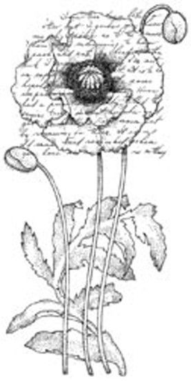 "Penny Black Rubber Stamp 2.25""X4""-Poppy Poem"