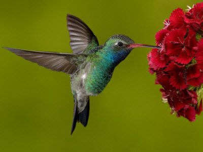 Legends say that hummingbirds float free of time, carrying our hopes for love, joy and celebration. Hummingbirds open our eyes to the wonder of the world and inspire us to open our hearts to loved ones and friends. The hummingbird's delicate grace reminds us that life is rich, beauty is everywhere, every personal connection has meaning and that laughter is life's sweetest creation.