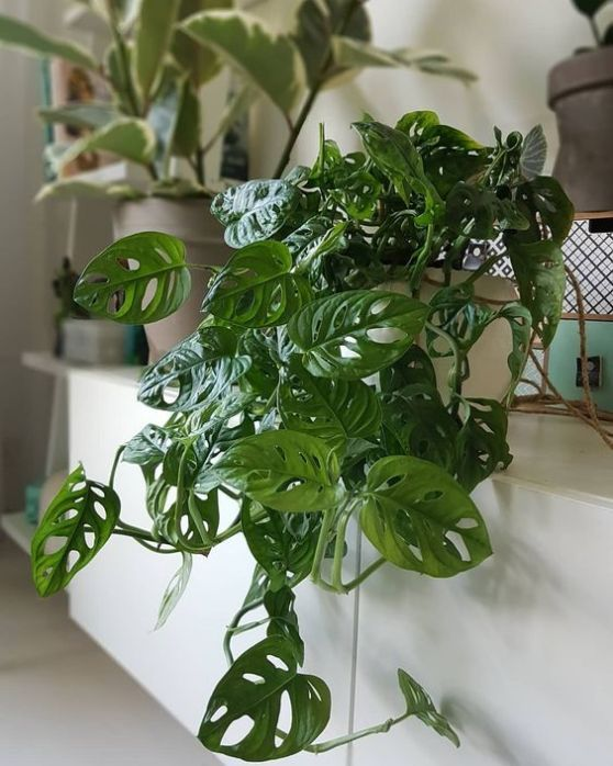 House Plants Rock My Style Uk Daily Lifestyle Blog Small House Plants Plants Easy House Plants