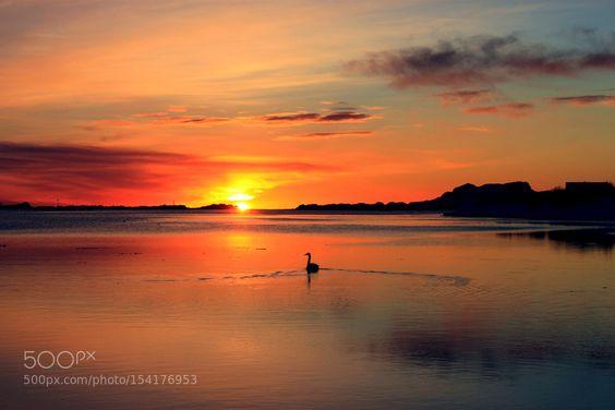 romantischer Sonnenuntergang mit Schwan by RainerKammerlochner. @go4fotos