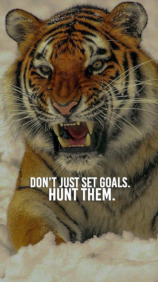 Wild Tiger Motivational Challenge Quote Poster Zazzle Com