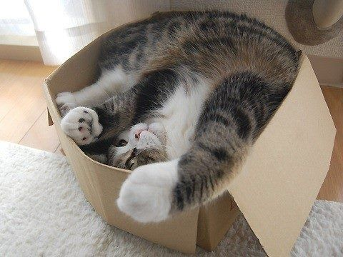 Cats and boxes. What is the fascination?