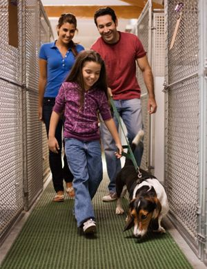8 Essential Steps to Bringing a New Dog into the Home | Cesar Millan