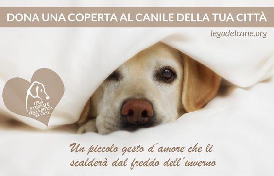 #inverno - Dona una coperta al #canile della tua città