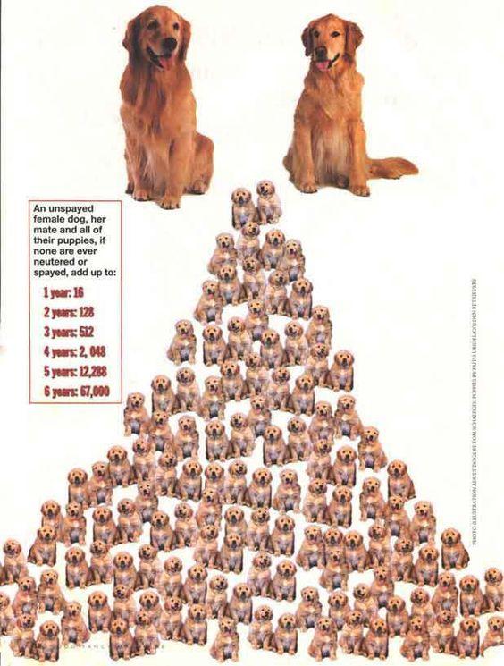 Pin By Aspca On Pet Care Tips Veterinary Humor Spay Aspca