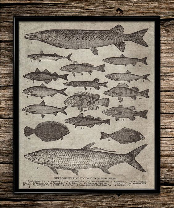Vintage breeds of fish fishing poster fishing von UniquelyGiftedArt