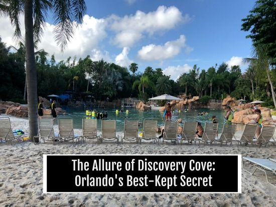 Discovery Cove Orlando S Best Kept Secret Wherever I May Roam Travel Blog Discovery Cove Discovery Cove Orlando Places Worth Visiting