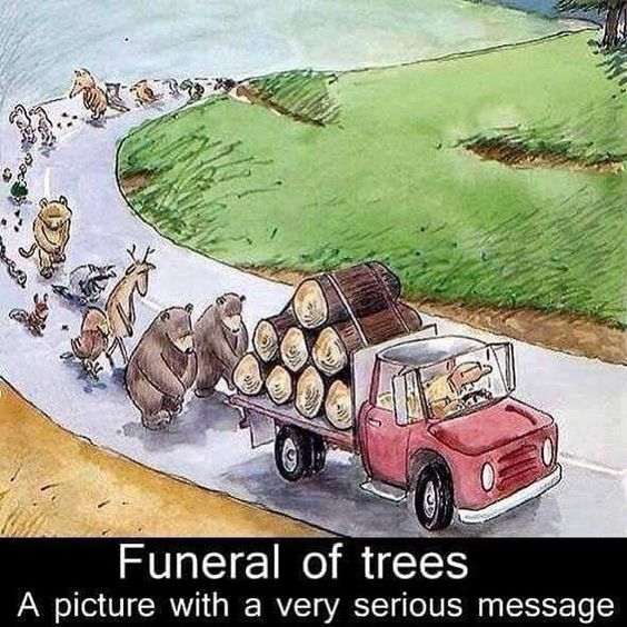 Heartbreaking. Trees provide shade, oxygen, the filter pollutants from the air, help fight against climate change, food, shelter and medicines.