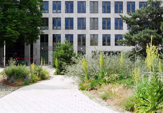 Die Kandelaber-Königskerze (Verbascum olympicum) erzeugt im lockeren Solitär-Verbund eine verbindene Raumgliederung und kann sich durch Selbstaussaat zudem selbst in öffentlichen Grünflächen halten.