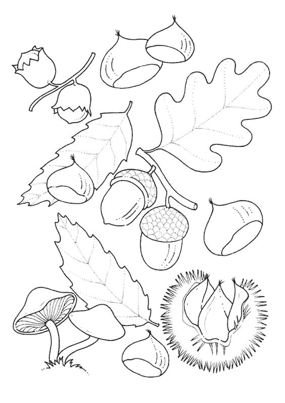 Automne gland feuille chene page 21 sur 37 sur - Hugo l escargot com coloriage ...