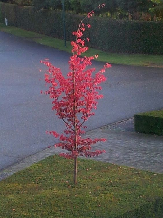 Autumn at home  ( 4)