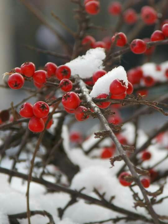 Winter,winter,love