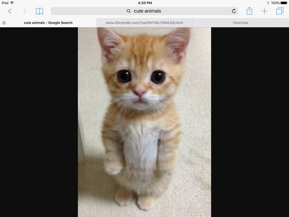 I found this on the web it so cute and it looks like my cat
