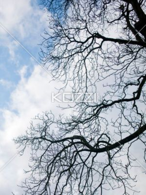 branches silhouette - Thick braches in sillhouette stetch across the sky