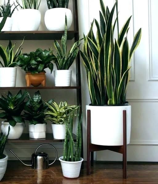 Image Result For Contemporary Indoor Pot Plants Melbourne Plant