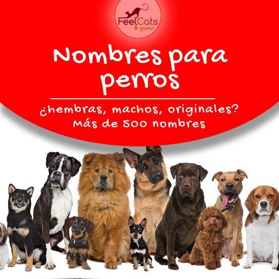 Nombres Para Perros Top 100 Más Bonitos Y Originales En 2020 Nombres Para Perros Machos Nombres De Perros Nombres De Perro Hembra