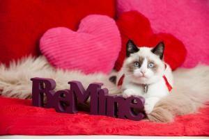 Original ideas for Valentine's Day #valentinesday