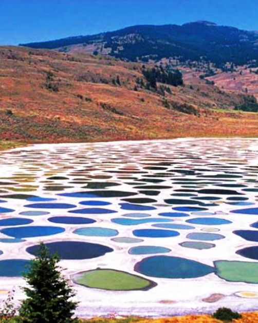 Located near the city of Osoyoos in British Columbia, Canada's Spotted Lake draws visitors from around the world. The Spotted Lake has a very highly concentration of numerous different minerals such as magnesium sulfate, calcium and sodium sulphates. It also contains extremely high concentrations of eight other minerals as well as some small doses of four others such as silver and titanium.: