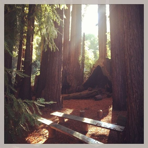 Cathedral Grove at Redwood Christian Park.  #redwoodchristianpark