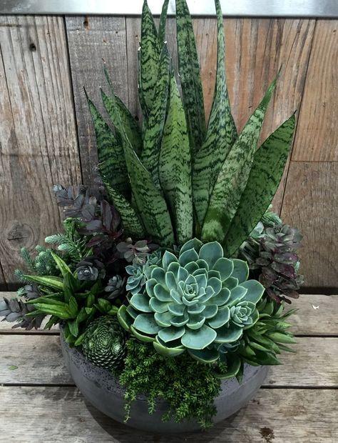 Succulent Garden Indoor Succulent Garden Diy Succulent