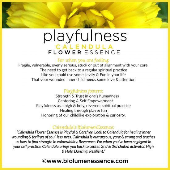 Biolumenessence Flower Essence Personality Profile Guide Flower Essences Bach Flower Remedies Flower Remedy