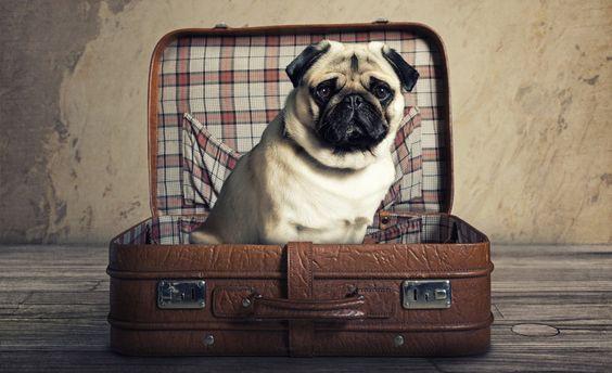 Urlaub mit dem Hund in den Leading Spa Resorts    #leadingsparesort #wellness #hunde #haustiere #aktionen #pauschalen #angebote #hundesitter #österreich