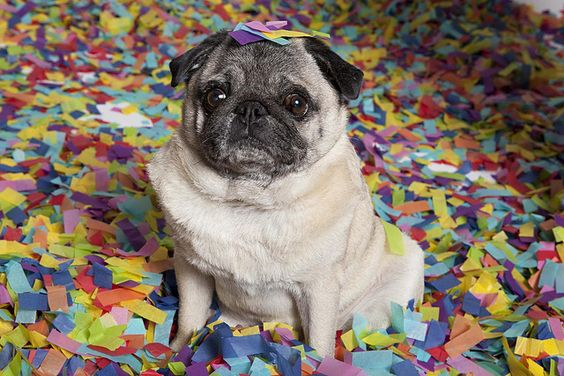 Winston in confetti. Happy new year!