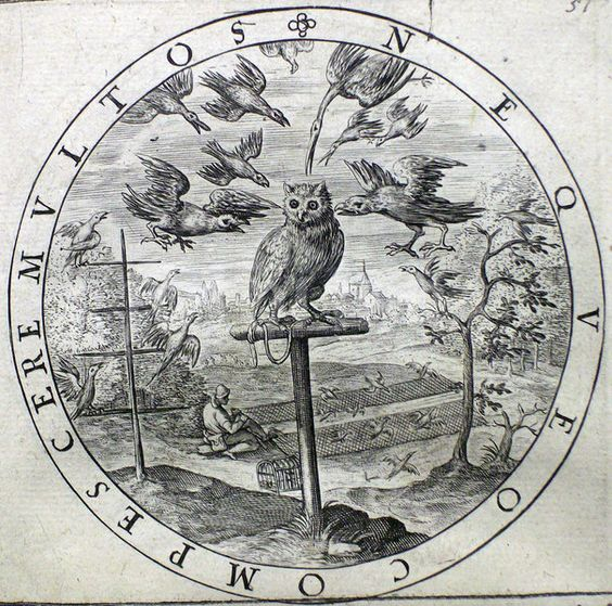 A mobbed owl as a symbol of calm, an etching in George Wither's 'A Collection of Emblemes, Ancient a