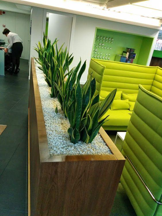 Alijardin paisajismo en interior de oficina en paseo de for Jardineras para interiores