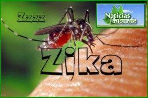 Surto do Zika Vírus Ligado à Liberação de Mosquitos Geneticamente Modificados:
