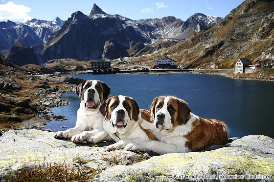 Switzerland, to see the St. Bernards. - I am not a dog person but we went through the Saint Bernard Pass and stopped to see the dogs!