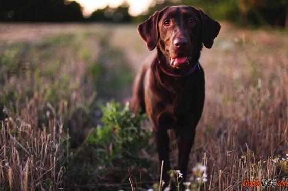 Photos chien adulte