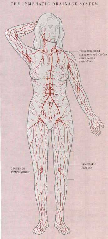 Lymphatic System Massage And Body Systems On Pinterest
