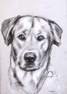 dessin chien   PORTRAITS DE CHIENS en peinture et dessin