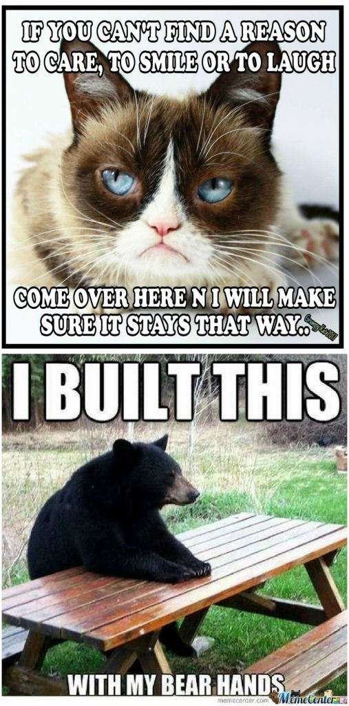 Top 20 Funny Memes Animals Top 20 Funniest Funny Memes Funny