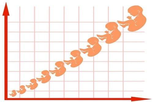 مراحل نمو الجنين في الشهر السابع Blog Blog Posts
